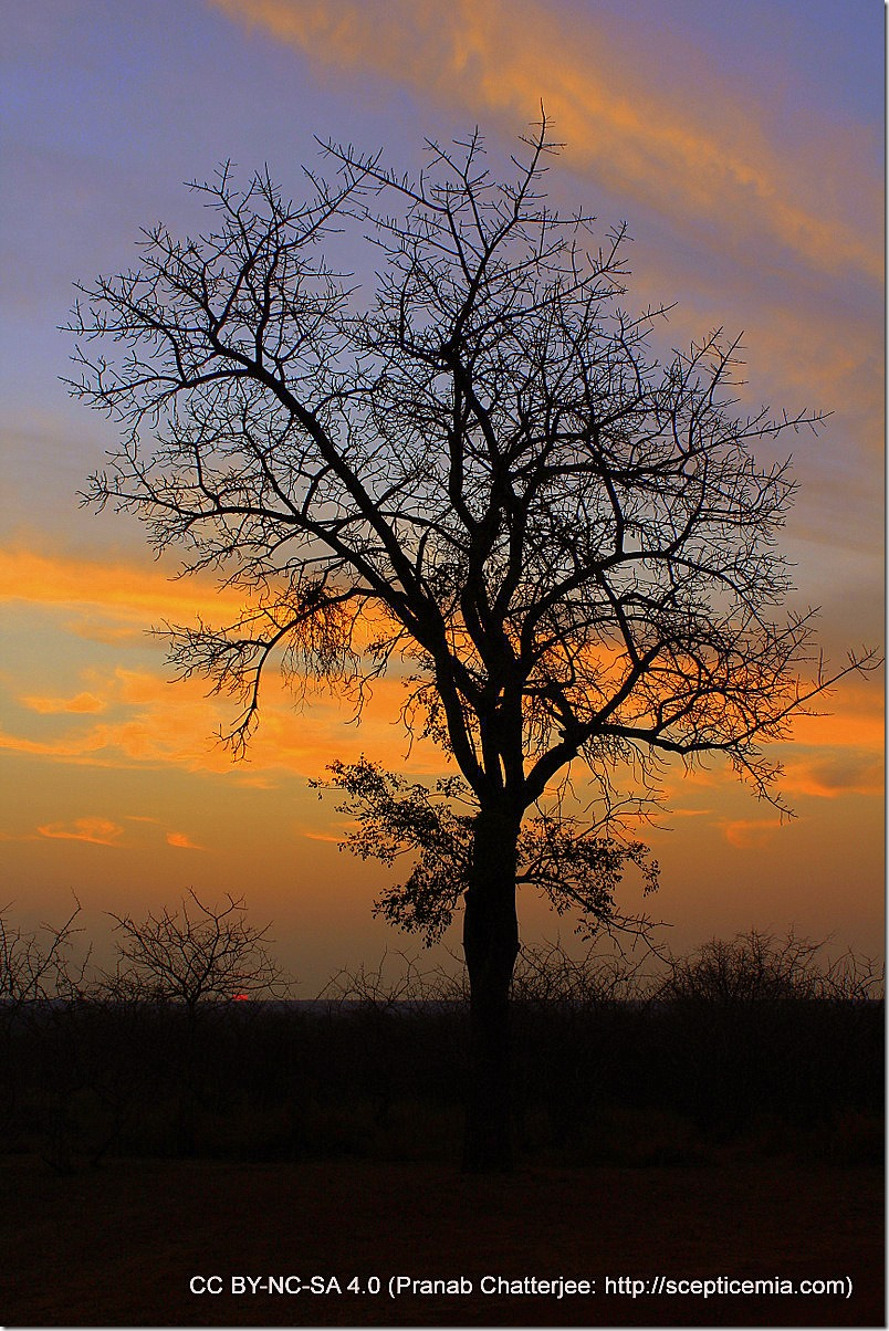16 Sunset
