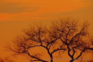 'Neath the setting sun
