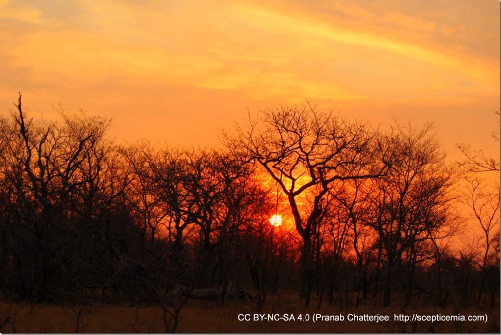 29 Sunsets