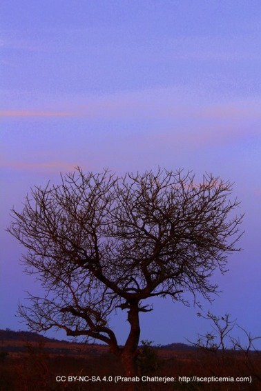 Evening in the low veld