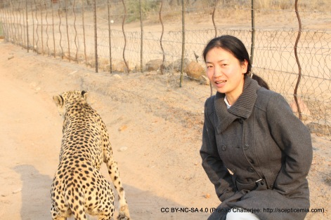 Posing with the cheetahs