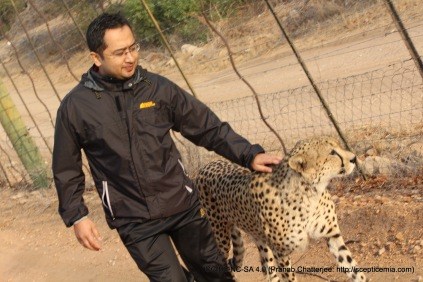 Walking the Cheetah