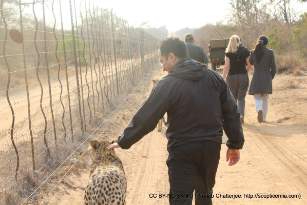 Walking with the Cheetah