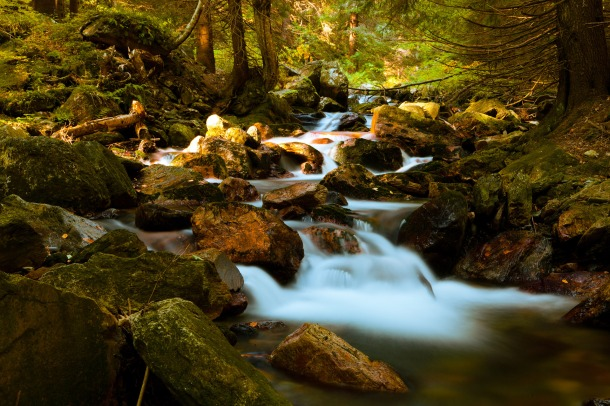 mountain-stream-in-forest