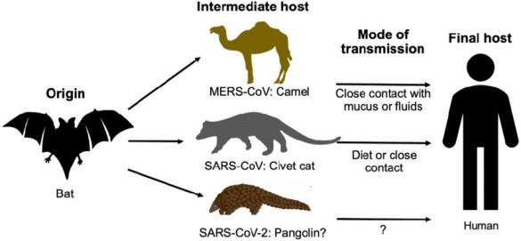 De onde veio o SARS-CoV-2?  - Ceticemia 2